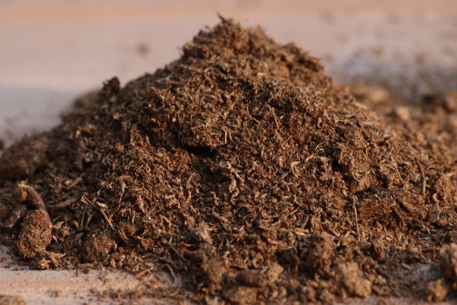Add fertilizer or amend the soil, if necessary